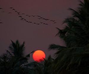 sunset, grunge, and theme image
