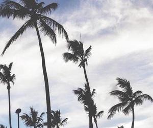 sky, palm trees, and palms image