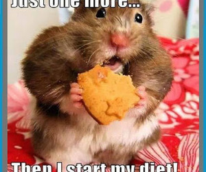 diet, funny, and animal image
