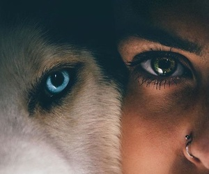 eyes, dog, and wolf image