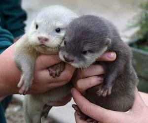 otter, animal, and baby image