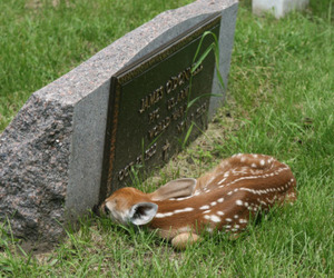 amazing, cute, and deer image