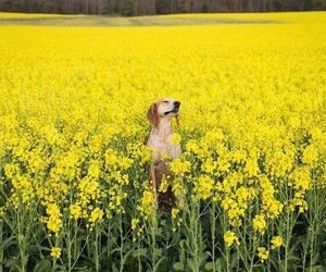 dog, flowers, and yellow image