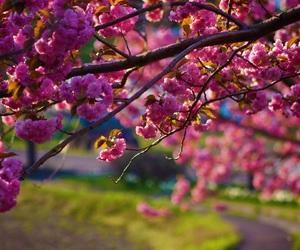 blossom and spring image
