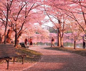 pink, spring, and park image