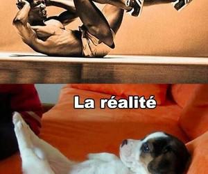 funny, dog, and reality image