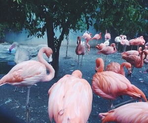 flamingo, pink, and animals image