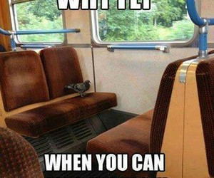 funny, train, and bird image