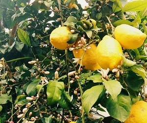 flowers, lemons, and plants image