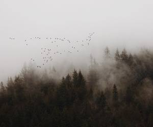 birds and forest image