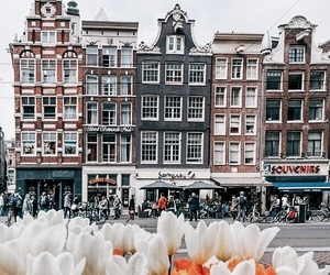 amsterdam, flowers, and travel image