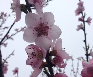 flowers, nature, and peach image