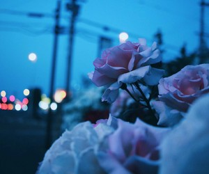 flowers, grunge, and night image