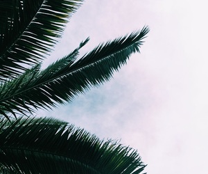 background, nature, and palm image