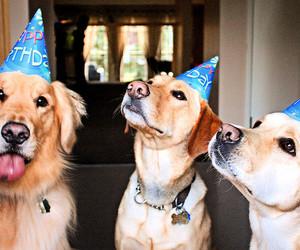 dog, animal, and birthday image