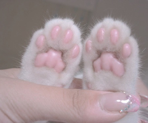 cat, pink, and paws image