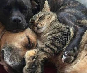 cat, dogs, and animals image