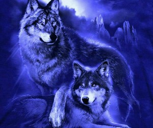 animals, sweet, and wolves image