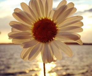 flower, sea, and spring image