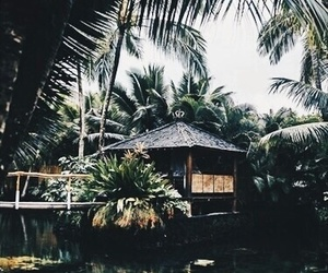tropical, dark, and green image