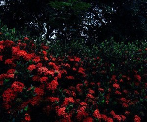 flower, flowerpower, and red image