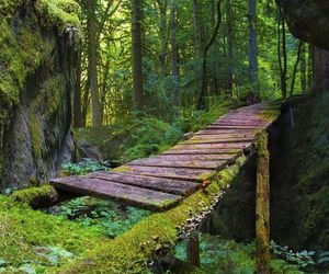 nature, bridge, and forest image