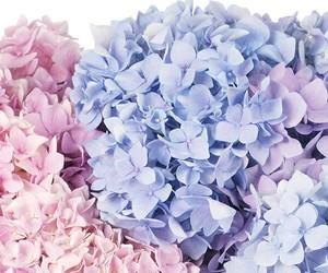 love pink image