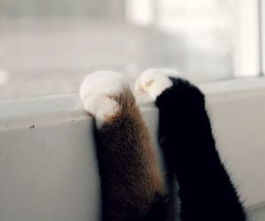 cat, paws, and photography image