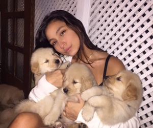 baby dog, cachorros, and beauty beautiful pretty image