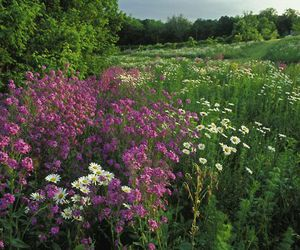 flowers, herbs, and meadow image