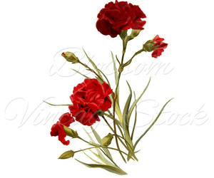 carnation, clipart, and etsy image