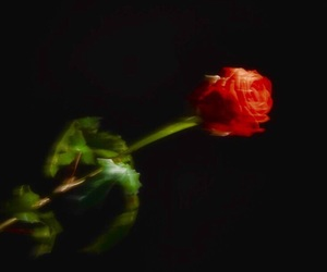 rose, black, and aesthetic image