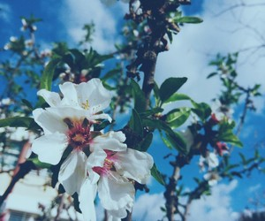 aesthetic, blue, and blossom image