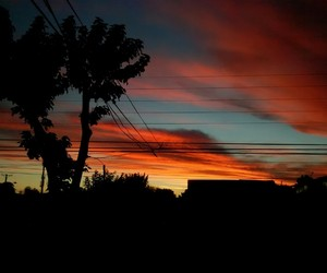 arbol, atardecer, and chile image