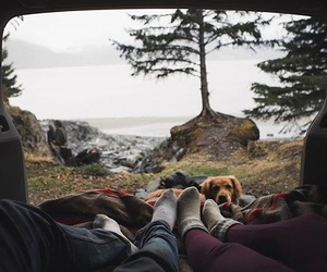 adventure, camp, and dog image