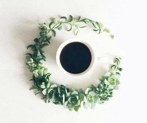 coffee, green, and cup image