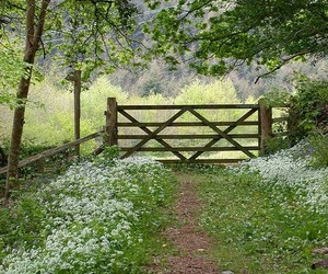 flowers and gate image