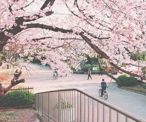 japan, spring, and flowers image