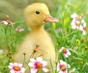 Chick, pretty, and cute image