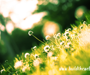 graphicdesign, spring, and nature image