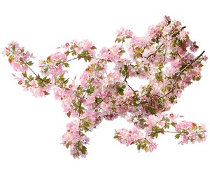 cherry, flowers, and overlay image