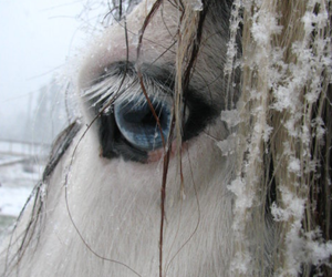 horse, eye, and snow image