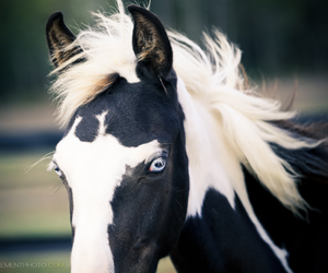 amazing, horse, and cute image
