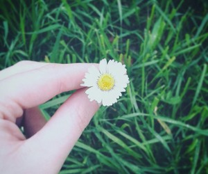 daisy, flower, and life image