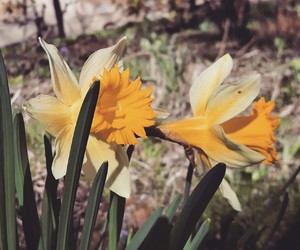 flowers spring sunny day image