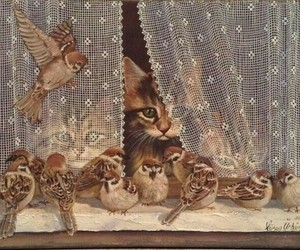 birds and cats image