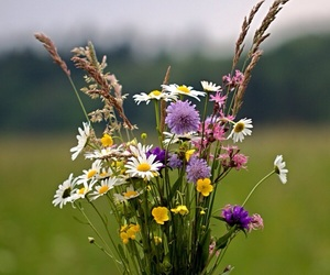 daisies, nature, and spring image