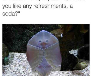 funny, aquarium, and lol image