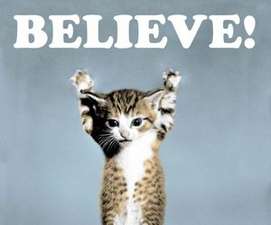believe, cat poster, and cat image