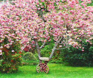 spring, season, and colors image